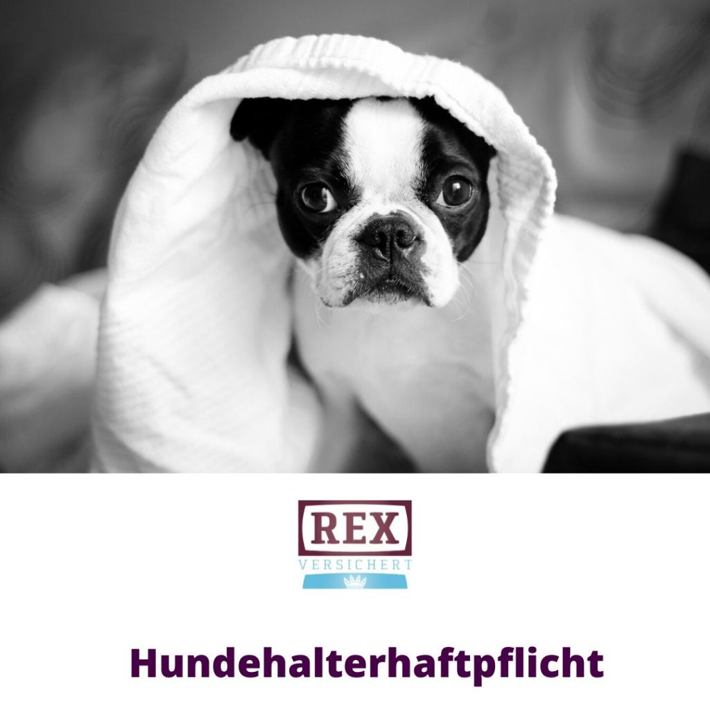 Versicherung Wolfsburg: Hundehalterhaftpflicht