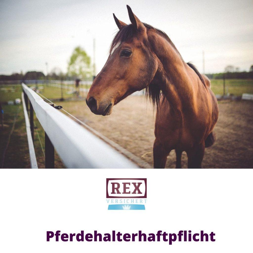 Versicherung Wolfsburg: Pferdehalterhaftpflicht